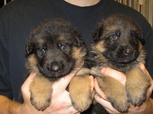 Two Small Puppies